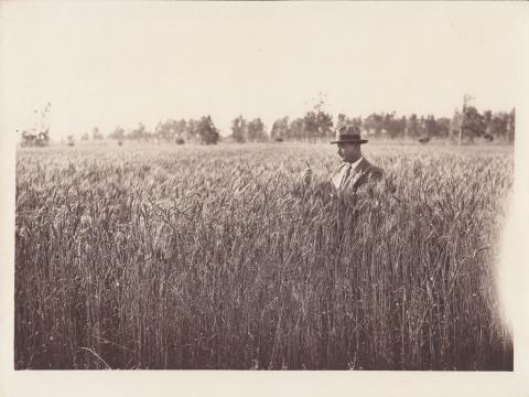 Campo di grano - Archivio di Stato di Oristano prot. 732 del 21-07-2016